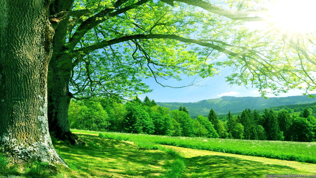 summer-nature-pictures-images-6